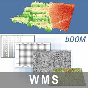 Bildbasiertes Digitales Oberflächenmodell 1m Bodenauflösung Brandenburg (WMS)